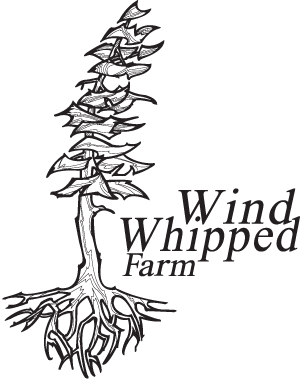 Wind Whipped Farm